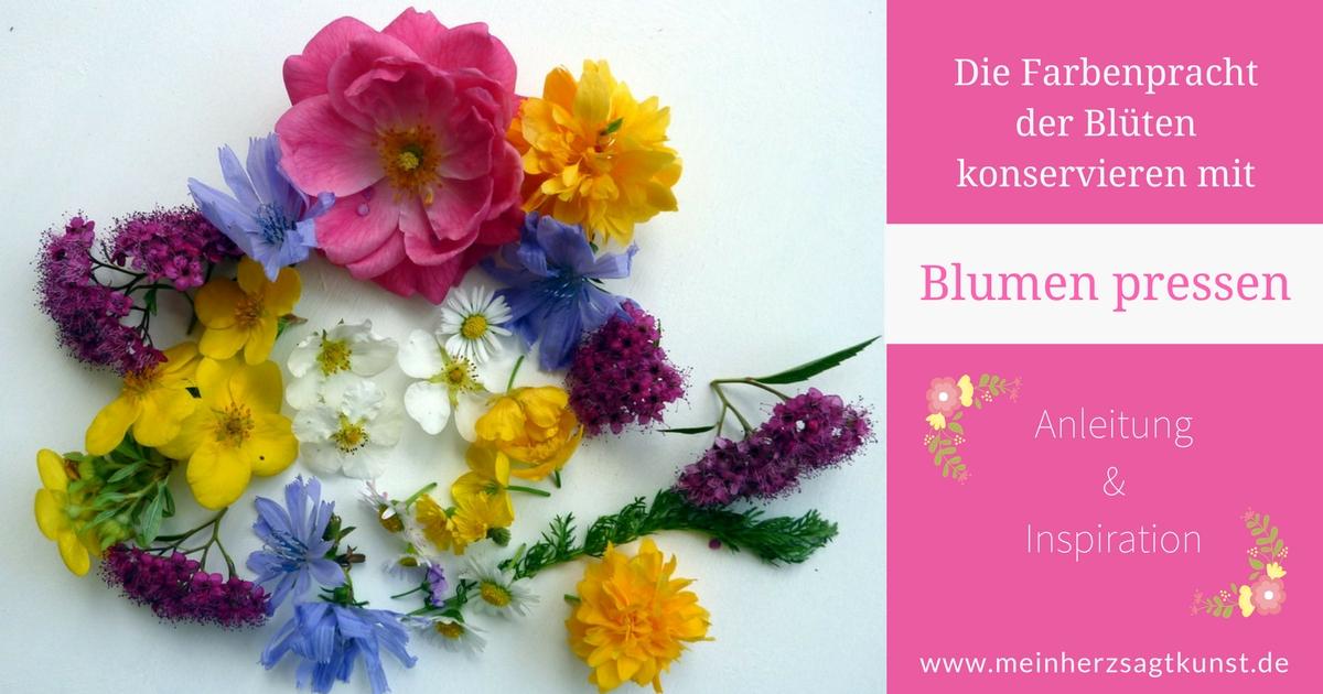 Blumen pressen – Blüten Farbenpracht konservieren
