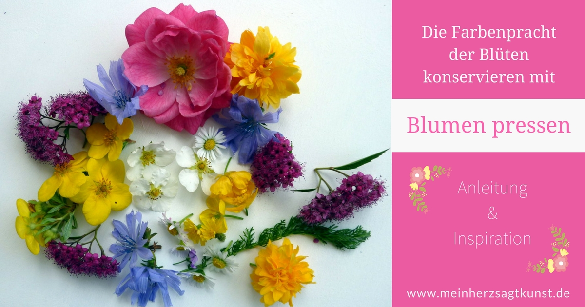 Blumen pressen Anleitung & Inspiration