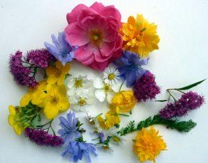 Blumen zum Pressen