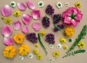 Blumen und Blüten zum Pressen liegend auf Löschpapier