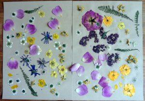 Mit einem Buch gepresste Blumen und Blüten auf Löschpapier